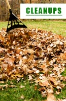 Fall Yard Clean Up MN