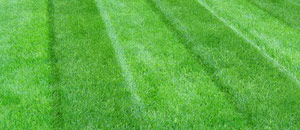 Mowing Services Twin Cities